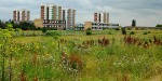 Ecological Clerk of Works for Protected Species on a Development Site in Dagenham, London