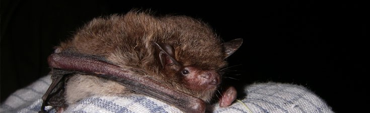 We hold Natural England survey licences for many protected species, including bats.