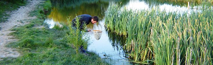 ecological surveys