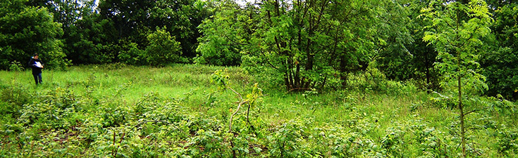 Ecological assessment for a residential development in Leicestershire.