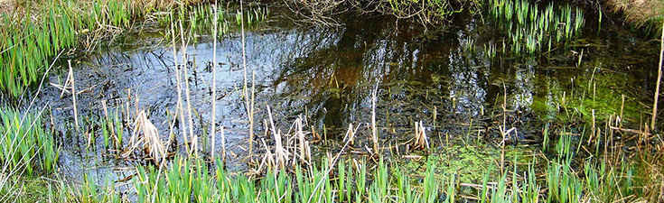 EPS mitigation licence for Great Crested Newts for a Distribution Centre in Nottinghamshire