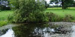 Great Crested Newt Surveys in Cheshire, East Staffordshire, Manchester & Worcester