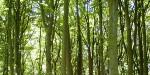 Ecological Management Plan for Himley Wood Restored Landfill Site, West Midlands