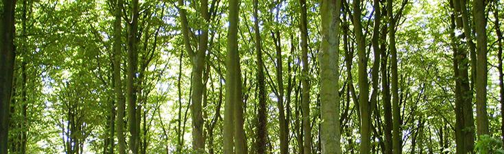 Ecological Management Plan